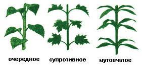 http://foxford.ru/uploads/tinymce_image/image/18757/%D0%BB%D0%B8%D1%81%D1%82%D0%BE%D1%80%D0%B0%D1%81%D0%BF%D0%BE%D0%BB%D0%BE%D0%B6%D0%B5%D0%BD%D0%B8%D0%B5.jpg