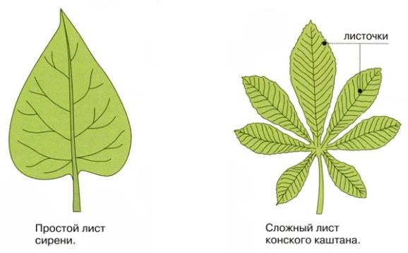http://foxford.ru/uploads/tinymce_image/image/9229/plastinka.jpg