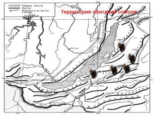 Территория обитания соболя
