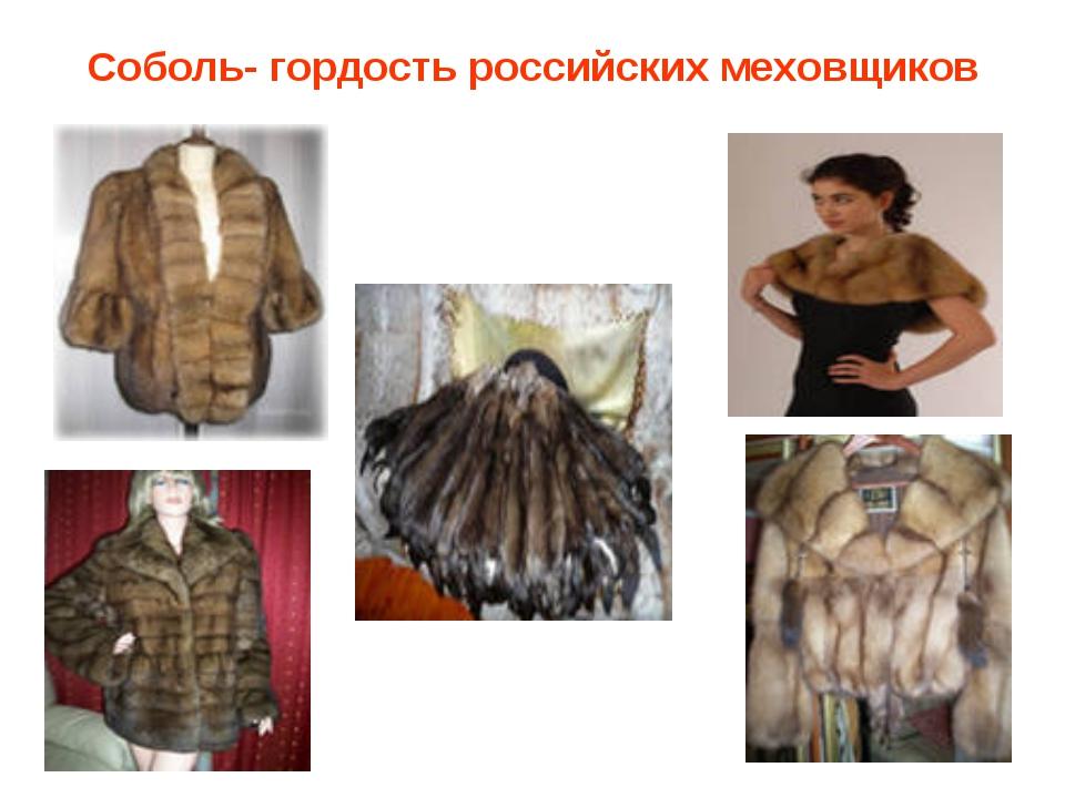Соболь- гордость российских меховщиков