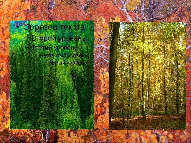 Э́т͞о хво́йный лес. Э́т͞о ли́стве͞н͞ный лес.
