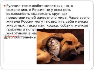 Русские тоже любят животных, но, к сожалению, в России не у всех есть возможн