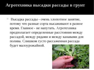 Агротехника высадки рассады в грунт Высадка рассады - очень хлопотное занятие