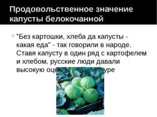 """Продовольственное значение капусты белокочанной """"Без картошки, хлеба да капус"""