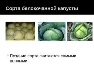 Сорта белокочанной капусты Поздние сорта считаются самыми ценными. Поздние со