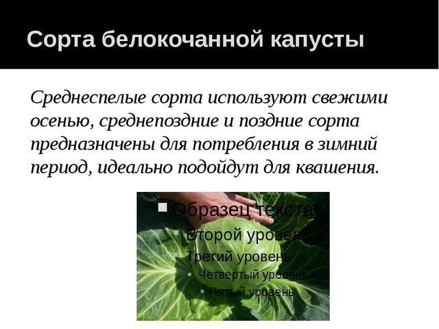 Сорта белокочанной капусты Среднеспелые сорта используют свежими осенью, сред...