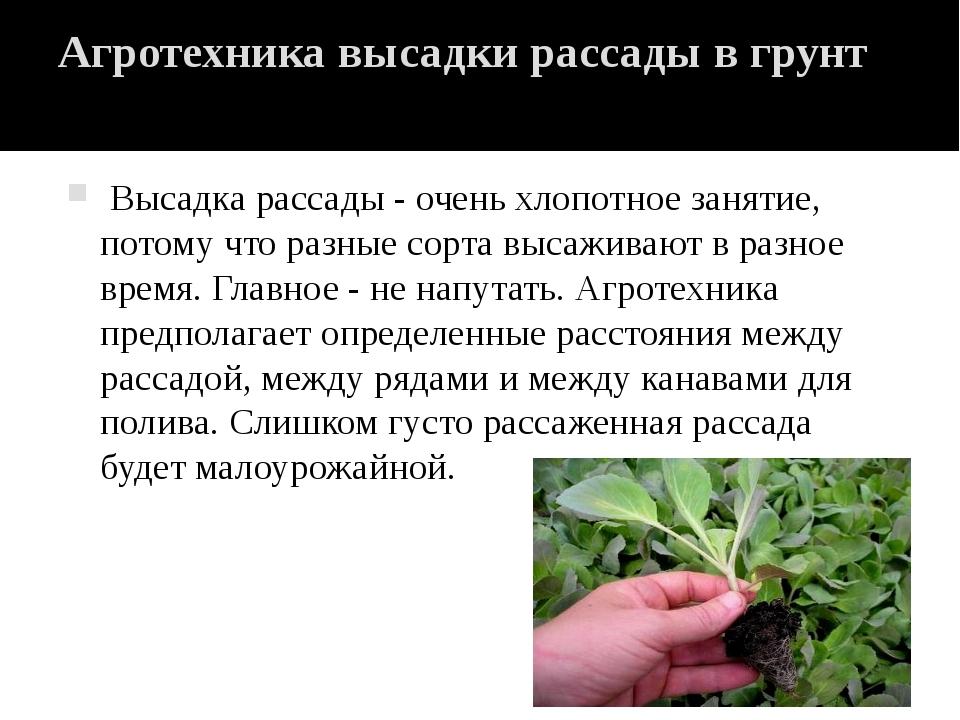 Агротехника высадки рассады в грунт Высадка рассады - очень хлопотное занятие...