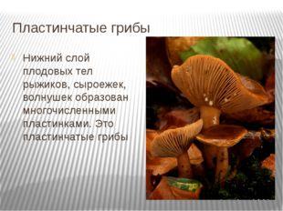 Пластинчатые грибы Нижний слой плодовых тел рыжиков, сыроежек, волнушек образ