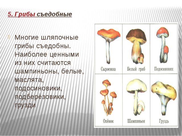 5. Грибы съедобные Многие шляпочные грибы съедобны. Наиболее ценными из них с...