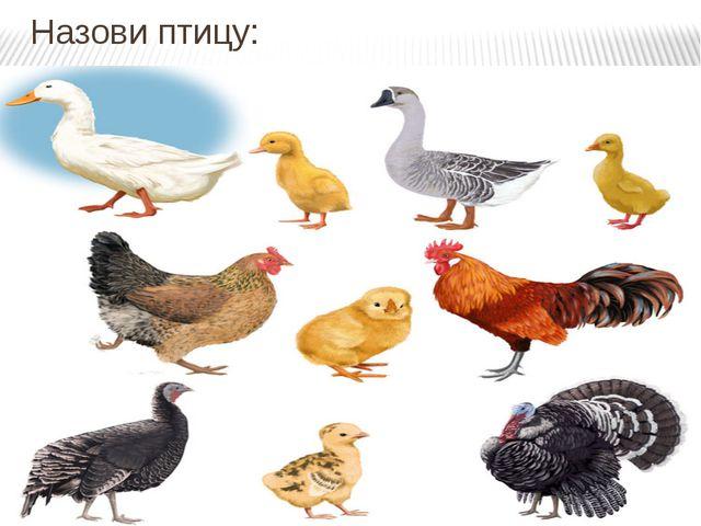 Назови птицу: