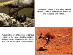 The kangaroo is one of Australia's national animals. Some of them are two met
