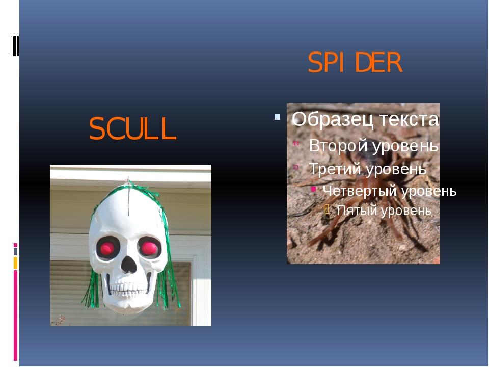 SPIDER SCULL