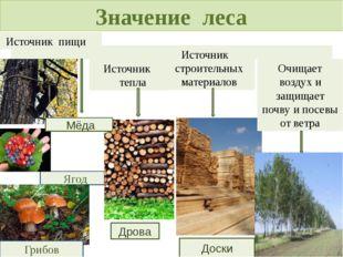 Значение леса Источник пищи Ягод Грибов Источник тепла Дрова Источник строите
