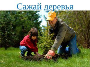 Сажай деревья