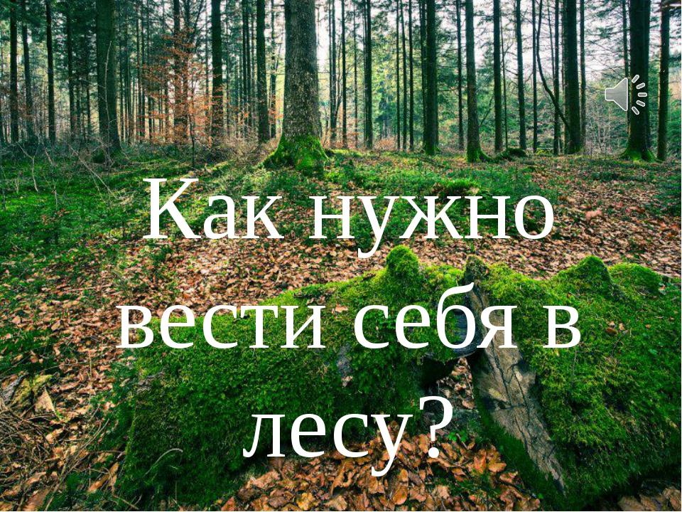 Как нужно вести себя в лесу?