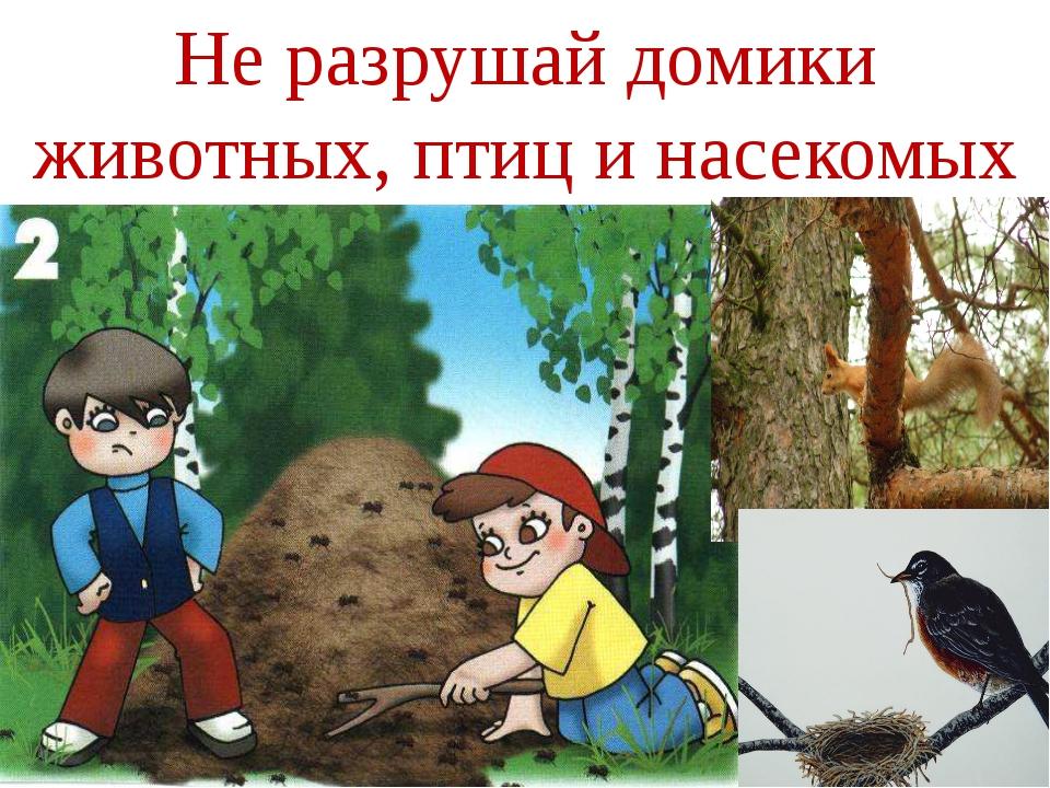 Не разрушай домики животных, птиц и насекомых