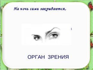 Есть у каждого лица два оконца. На ночь сами закрываются, а с восходом солнца