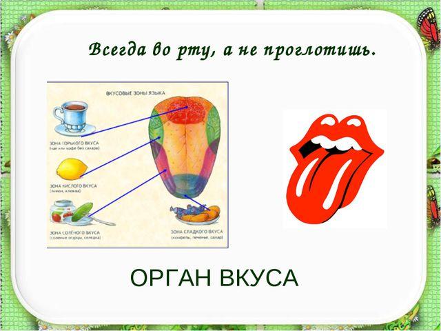 ОРГАН ВКУСА Всегда во рту, а не проглотишь. http://aida.ucoz.ru