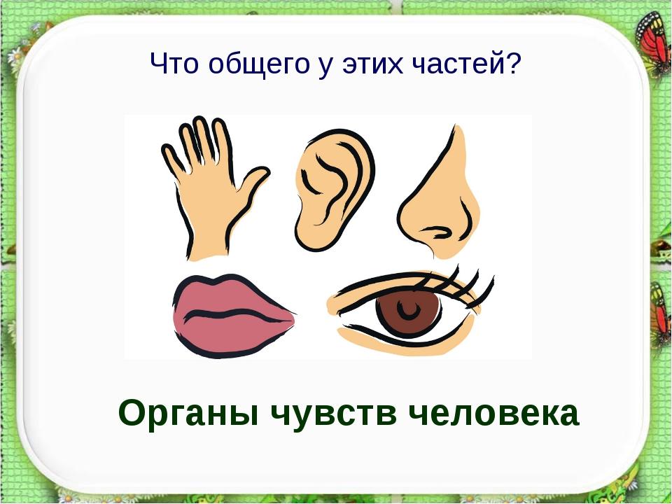 Что общего у этих частей? Органы чувств человека http://aida.ucoz.ru