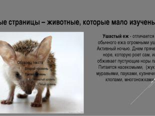 Серые страницы – животные, которые мало изучены. Ушастый еж - отличается от о