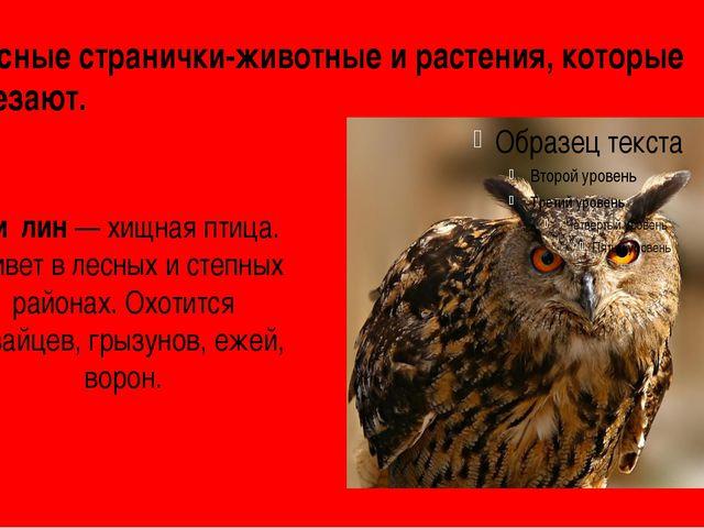 Красные странички-животные и растения, которые исчезают. Фи́лин— хищная птиц...