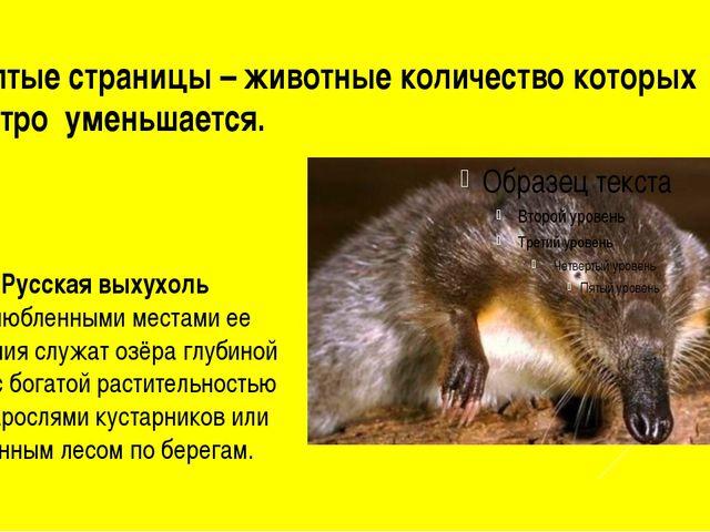 Желтые страницы – животные количество которых быстро уменьшается. Русская вых...