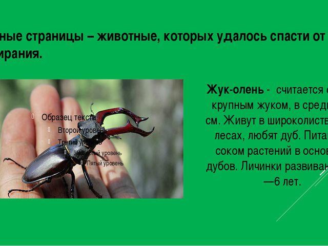Зеленые страницы – животные, которых удалось спасти от вымирания. Жук-олень -...