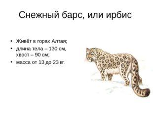 Снежный барс, или ирбис Живёт в горах Алтая; длина тела – 130 см, хвост – 90