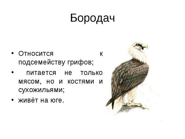 Бородач Относится к подсемейству грифов; питается не только мясом, но и костя...