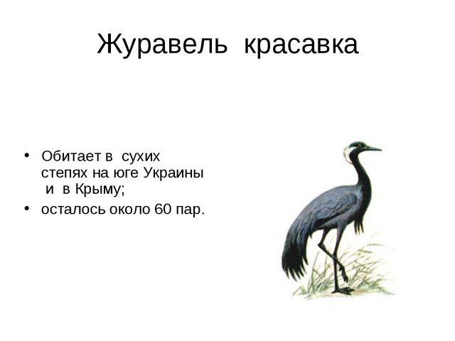 Журавель красавка Обитает в сухих степях на юге Украины и в Крыму; осталось о...