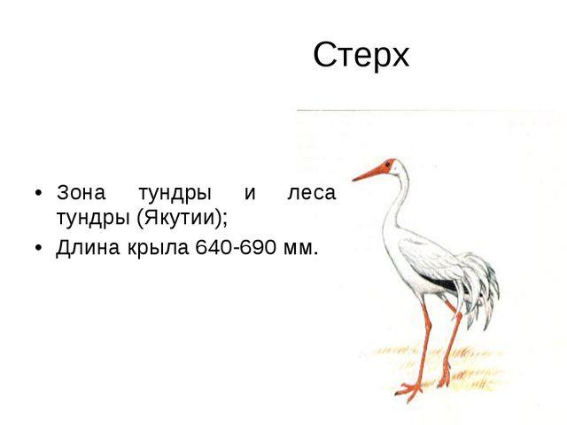 Стерх Зона тундры и леса тундры (Якутии); Длина крыла 640-690 мм.