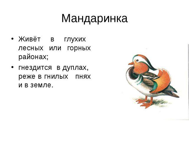Мандаринка Живёт в глухих лесных или горных районах; гнездится в дуплах, реже...