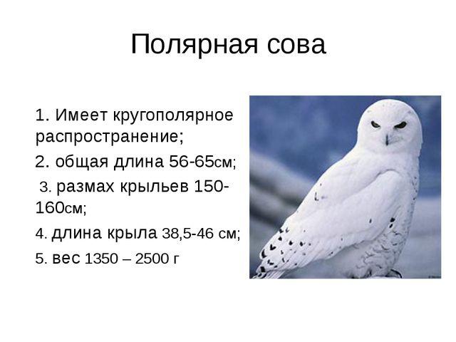 Полярная сова 1. Имеет кругополярное распространение; 2. общая длина 56-65см;...