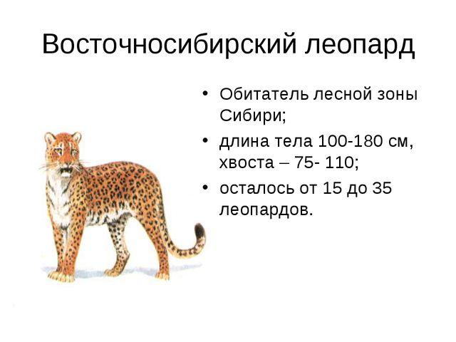 Восточносибирский леопард Обитатель лесной зоны Сибири; длина тела 100-180 см...