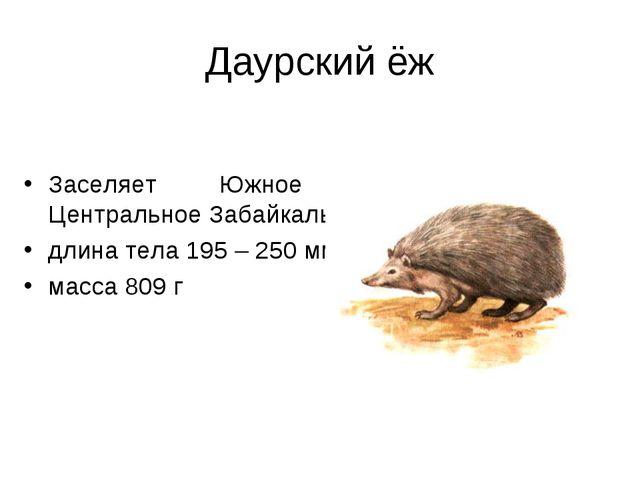 Даурский ёж Заселяет Южное и Центральное Забайкалье ; длина тела 195 – 250 мм...