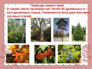 Природа нашего края. В наших лесах произрастает более 80 древесных и кустарн