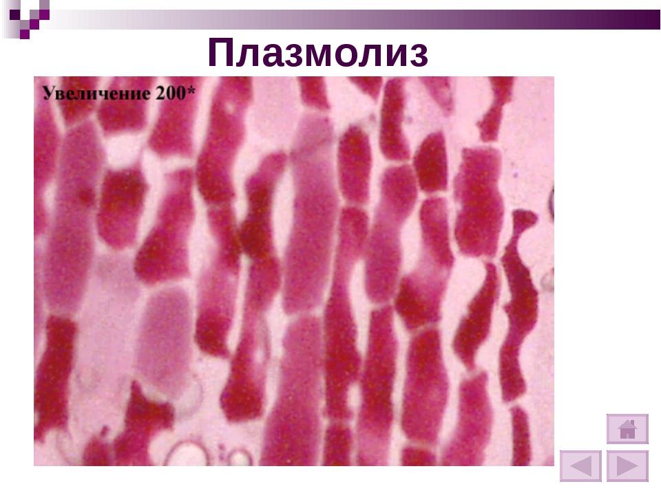 Плазмолиз