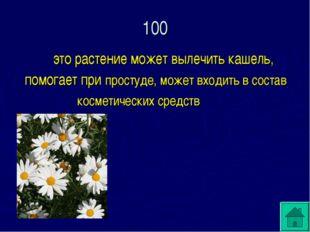 100  это растение может вылечить кашель, помогает при простуде, может входит