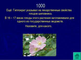 Ещё Гиппократ указывал на лекарственные свойства плодов шиповника. В 16 – 17