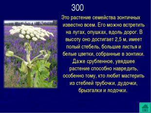 Это растение семейства зонтичных известно всем. Его можно встретить на лугах,