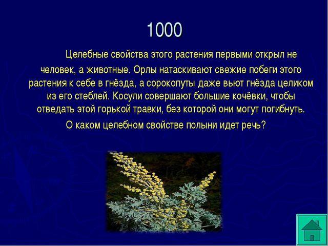 1000 Целебные свойства этого растения первыми открыл не человек, а животные...