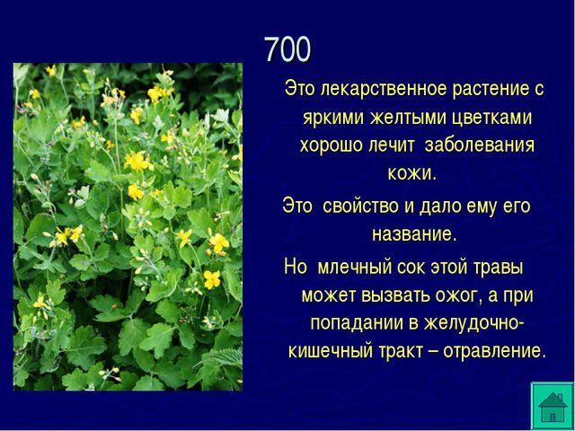 Это лекарственное растение с яркими желтыми цветками хорошо лечит заболевани...