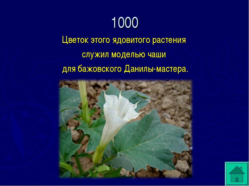 Цветок этого ядовитого растения служил моделью чаши для бажовского Данилы-мас...
