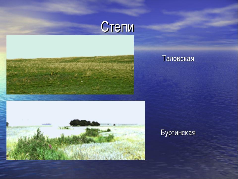 Степи Таловская Буртинская