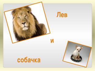 Лев собачка и