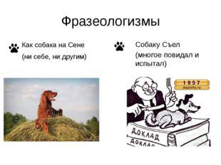 Фразеологизмы Собаку Съел (многое повидал и испытал) Как собака на Сене (ни с