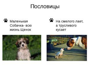 Пословицы Маленькая Собачка- всю жизнь Щенок На смелого лает, а трусливого ку