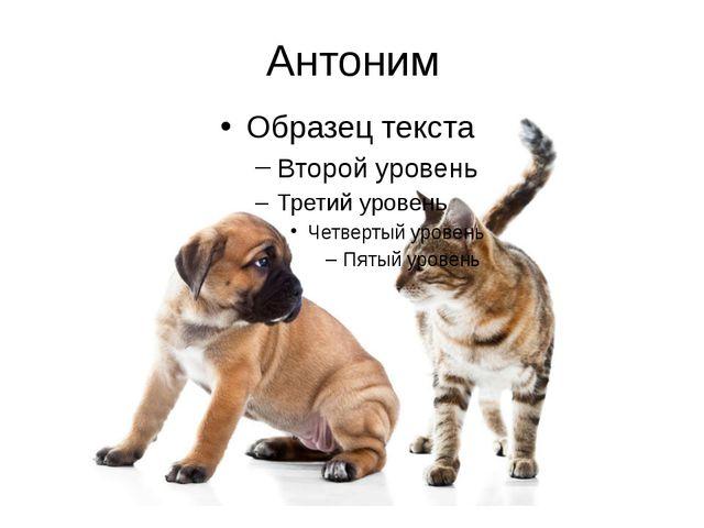 Антоним
