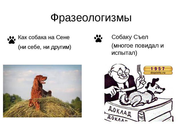 Фразеологизмы Собаку Съел (многое повидал и испытал) Как собака на Сене (ни с...