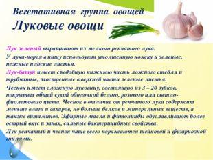 Вегетативная группа овощей Луковые овощи Лук зеленый выращивают из мелкого ре